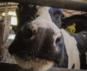 Resources for Dairy Farmers